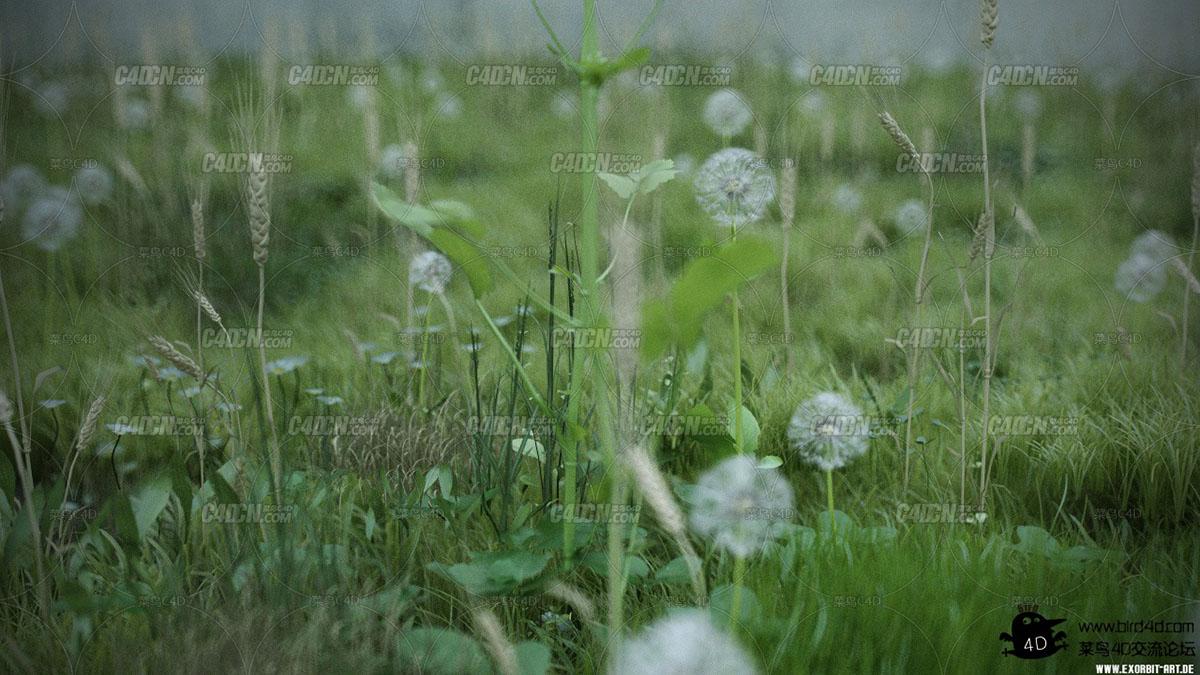 Real-ground-plants(5).jpg