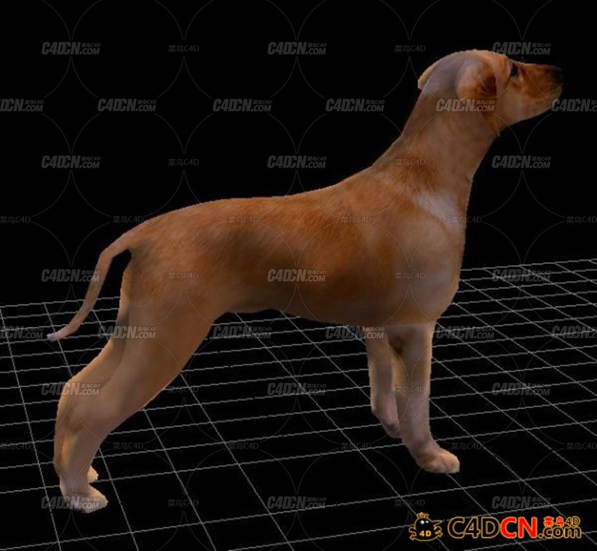 C4D小狗