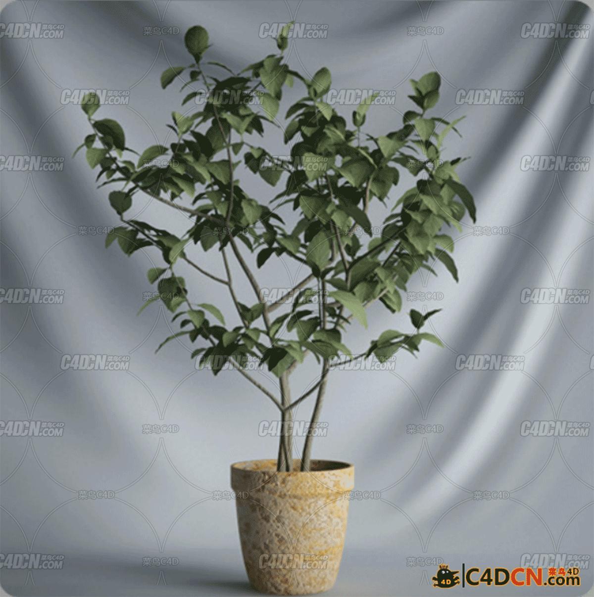 C4D盆栽模型08