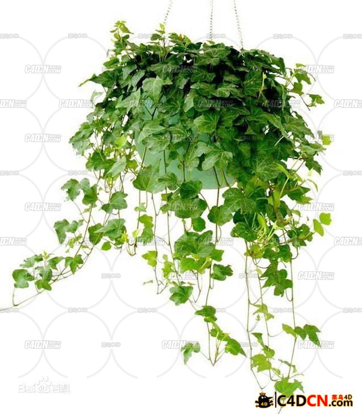 IvyGrower 1.2.1常春藤植物生长插件汉化版