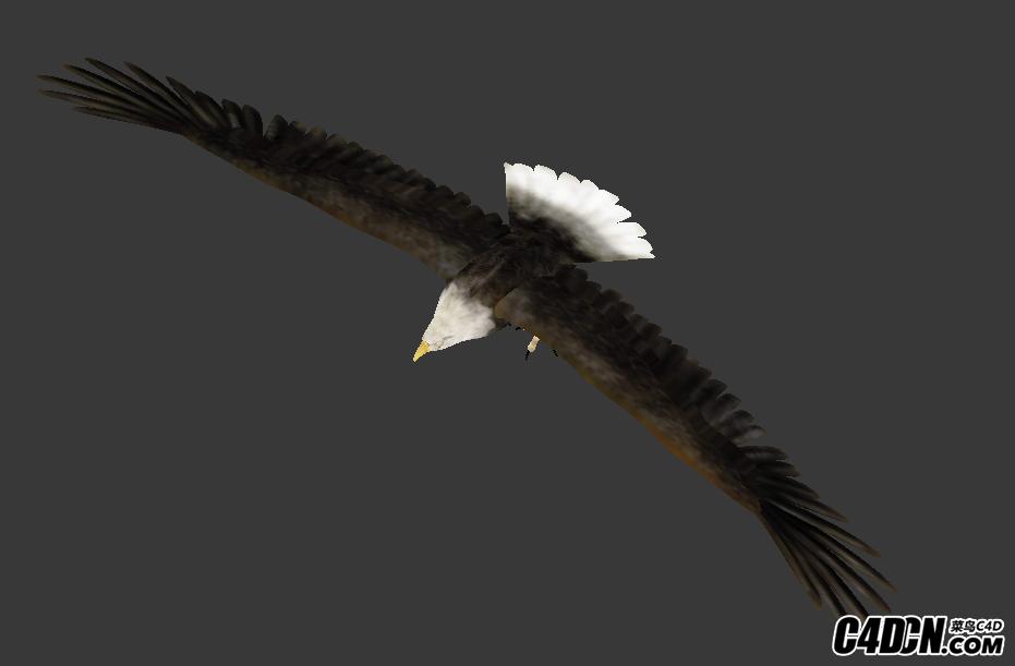 MAX苍鹰老鹰模型