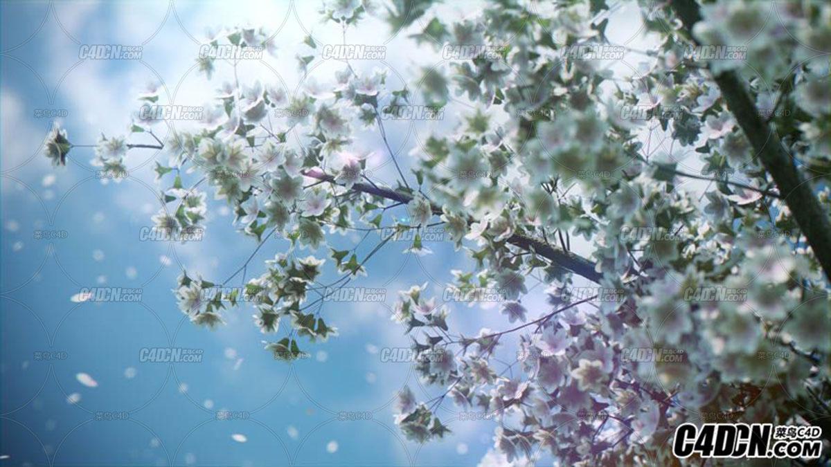5个高分辨率的的樱花树