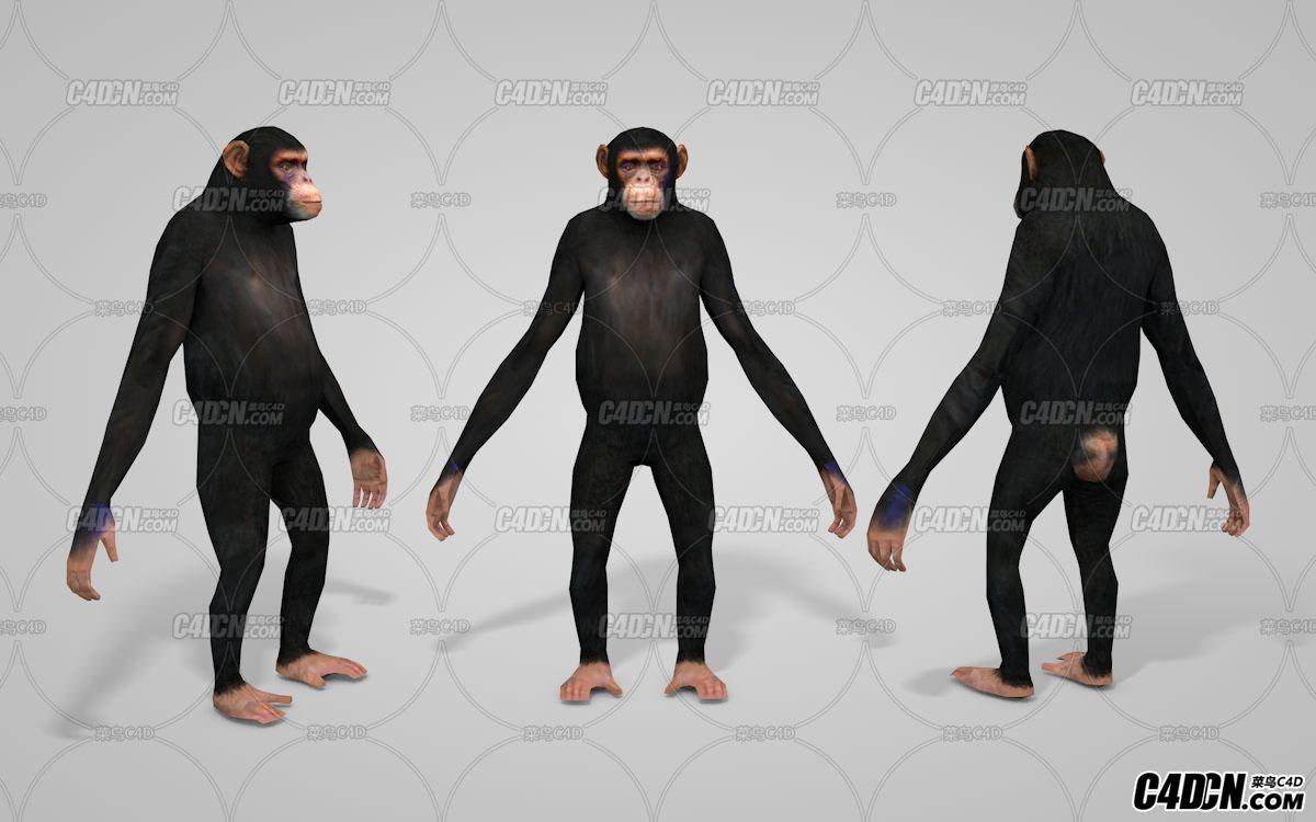 C4D黑猩猩模型