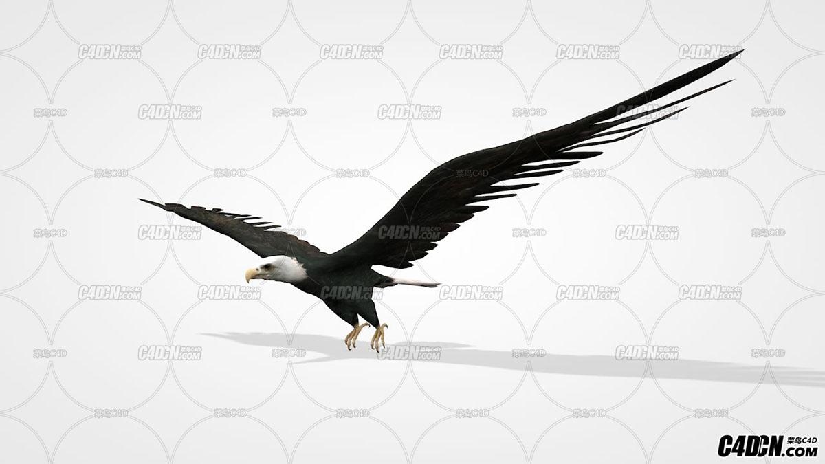 飞行状态的老鹰 C4D动物模型