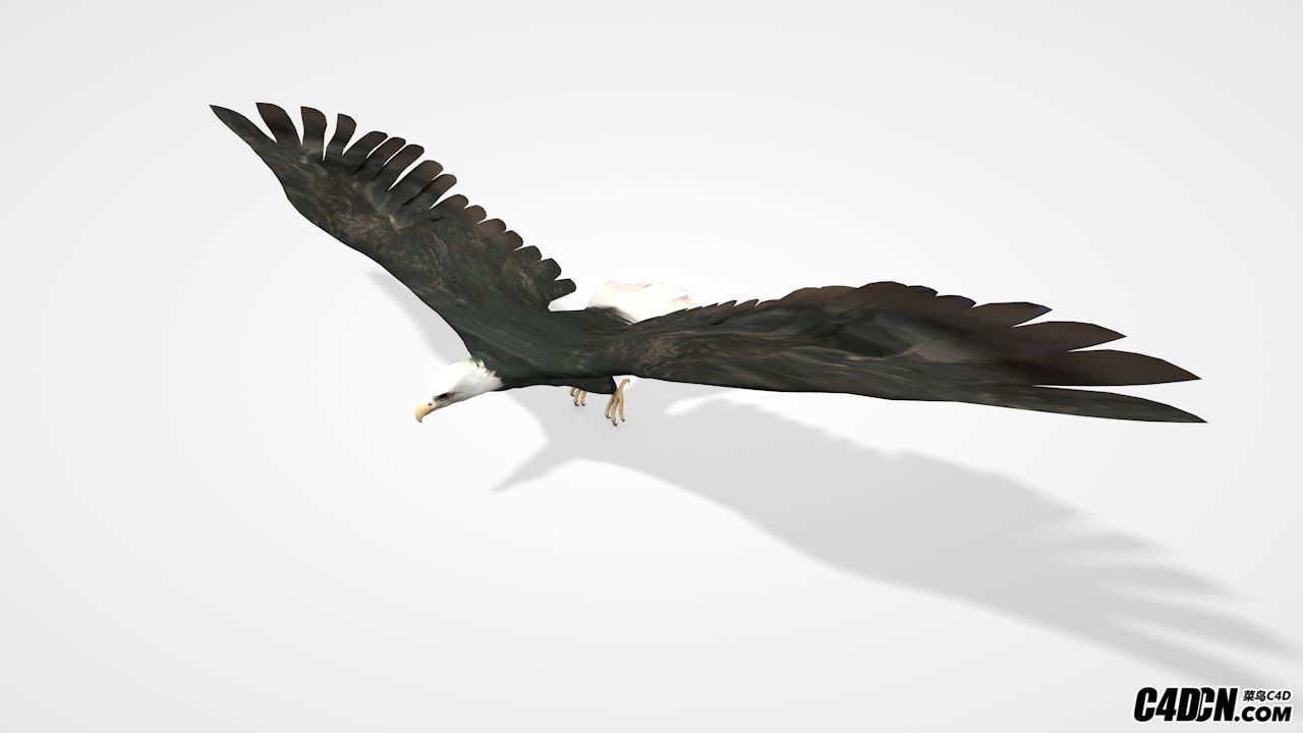 C4D鸟类模型 老鹰 雄鹰 动物模型