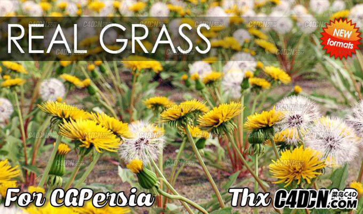 C4D预设 写实花草植物模型预设包 VIZPARK Real Grass for Cinema4D MUS3