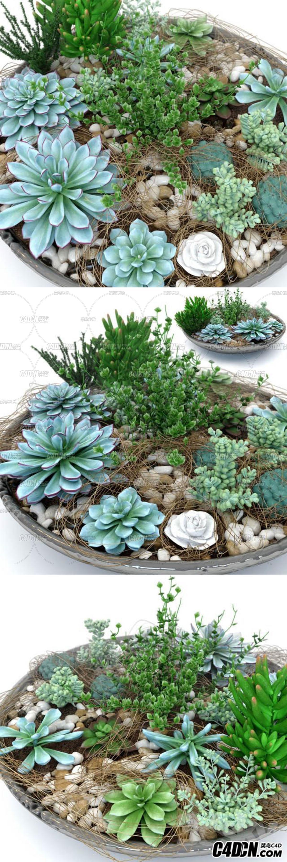 15种多肉植物模型合集