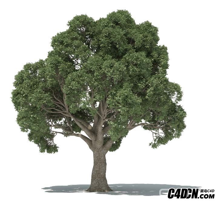 森林植物生成插件中文汉化版 - Forester for Cinema 4D R18