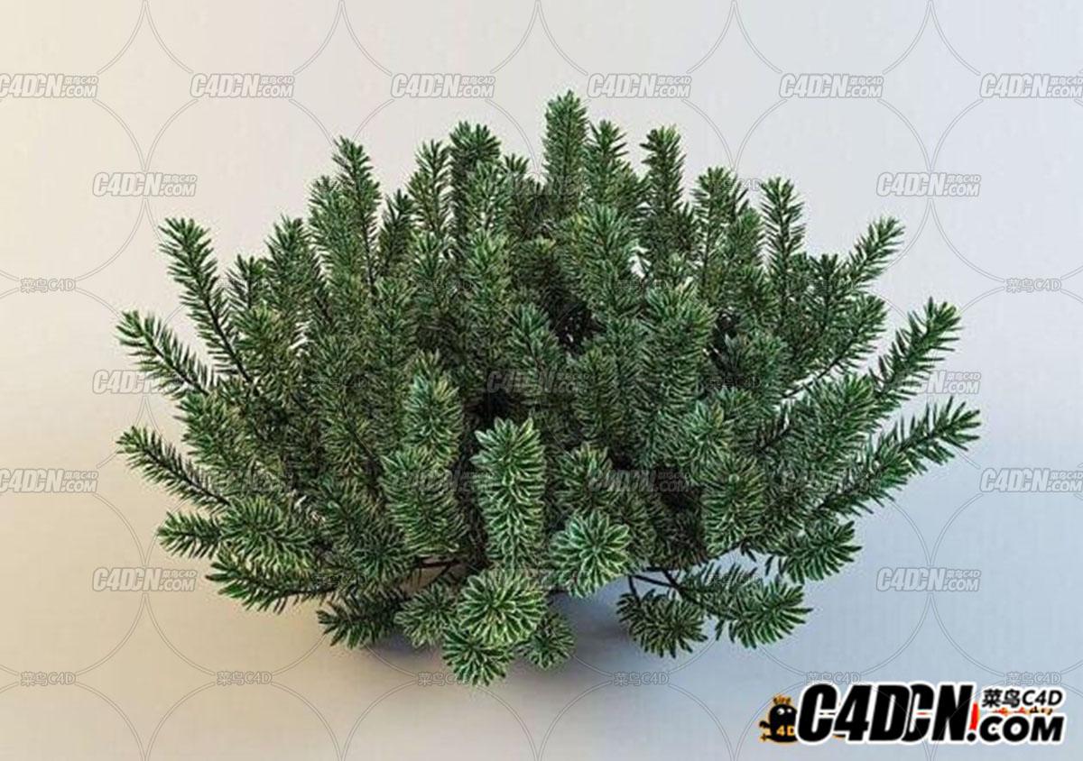 C4D模型 灌木丛模型bush tree