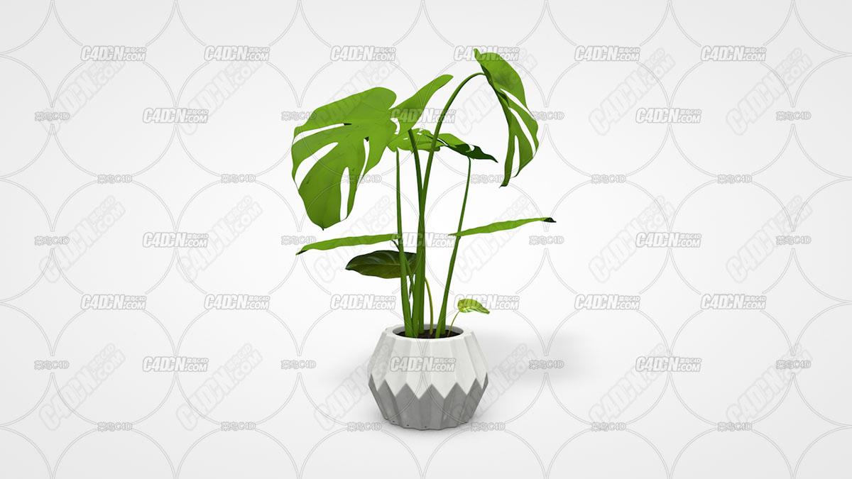 C4D盆栽 植物模型