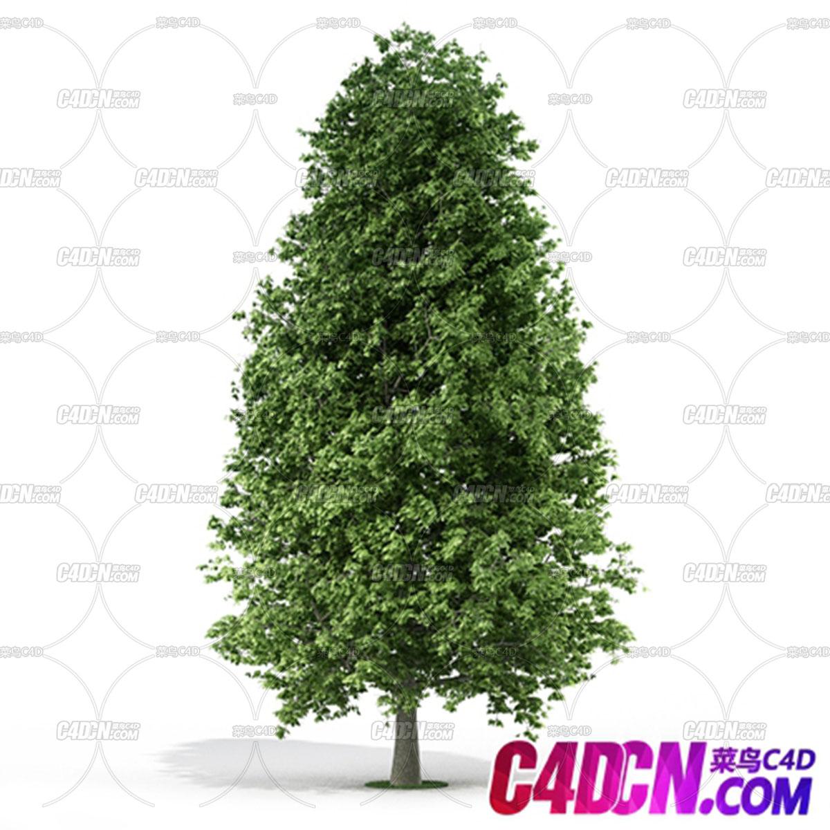 阔叶绿色高达树木C4D模型