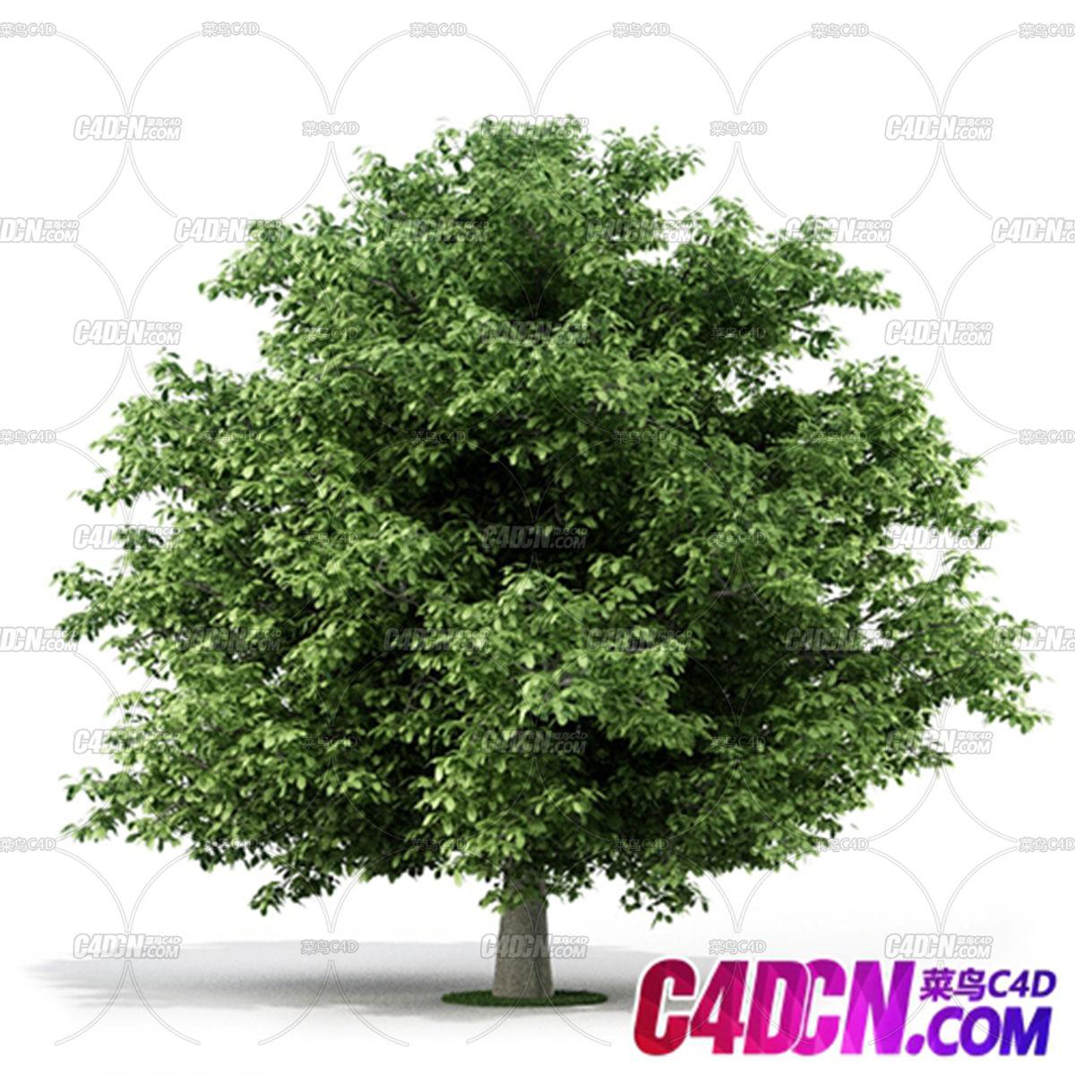 C4D模型 繁茂绿叶大树