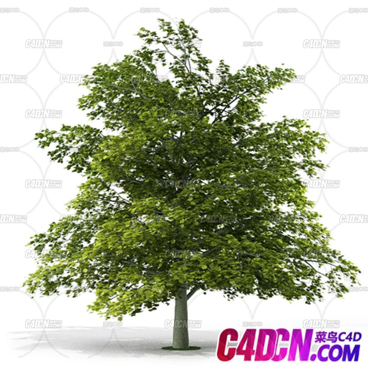 C4D模型 枝繁叶茂的绿色树木模型