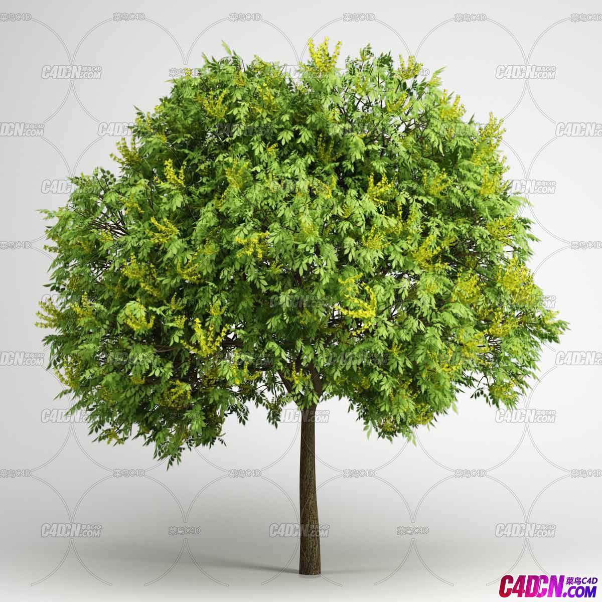 庞大写实树木植物C4D模型
