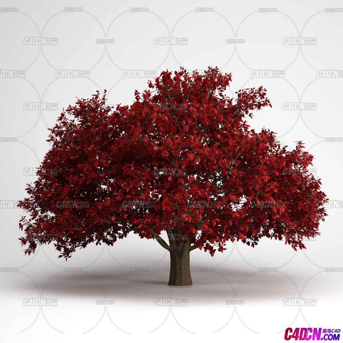 写实粗壮红色枫树枫叶大树植物C4D模型