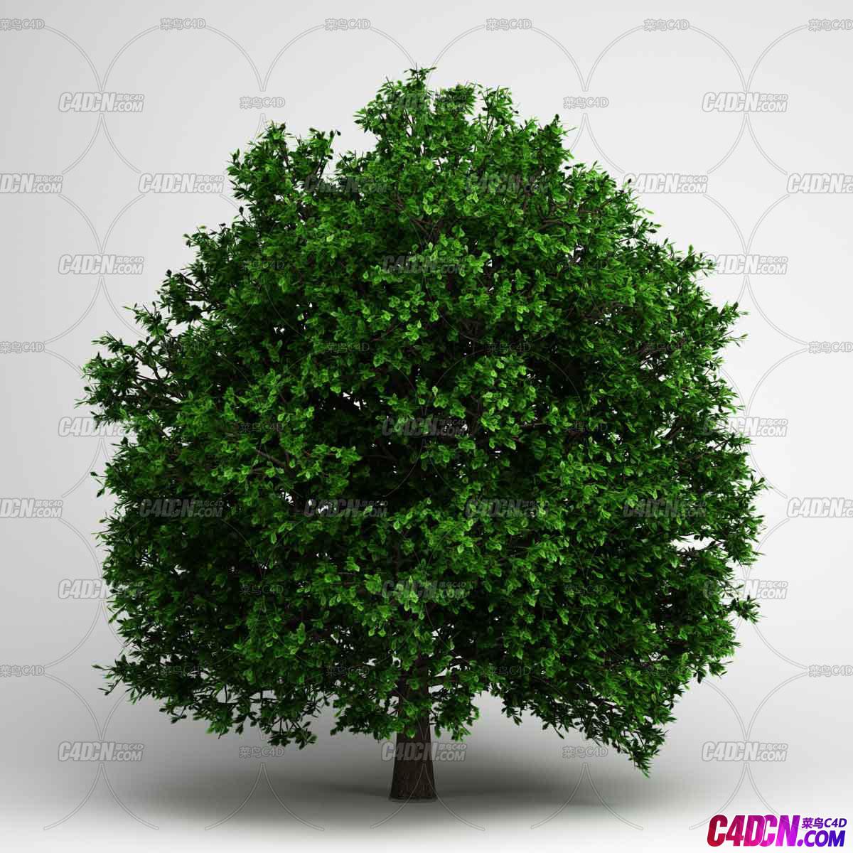 大树绿色写实植物枝繁叶茂C4D模型