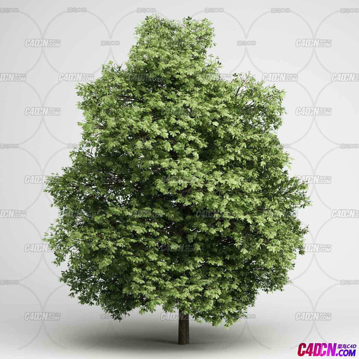 夏季浓密树叶大树植物C4D模型
