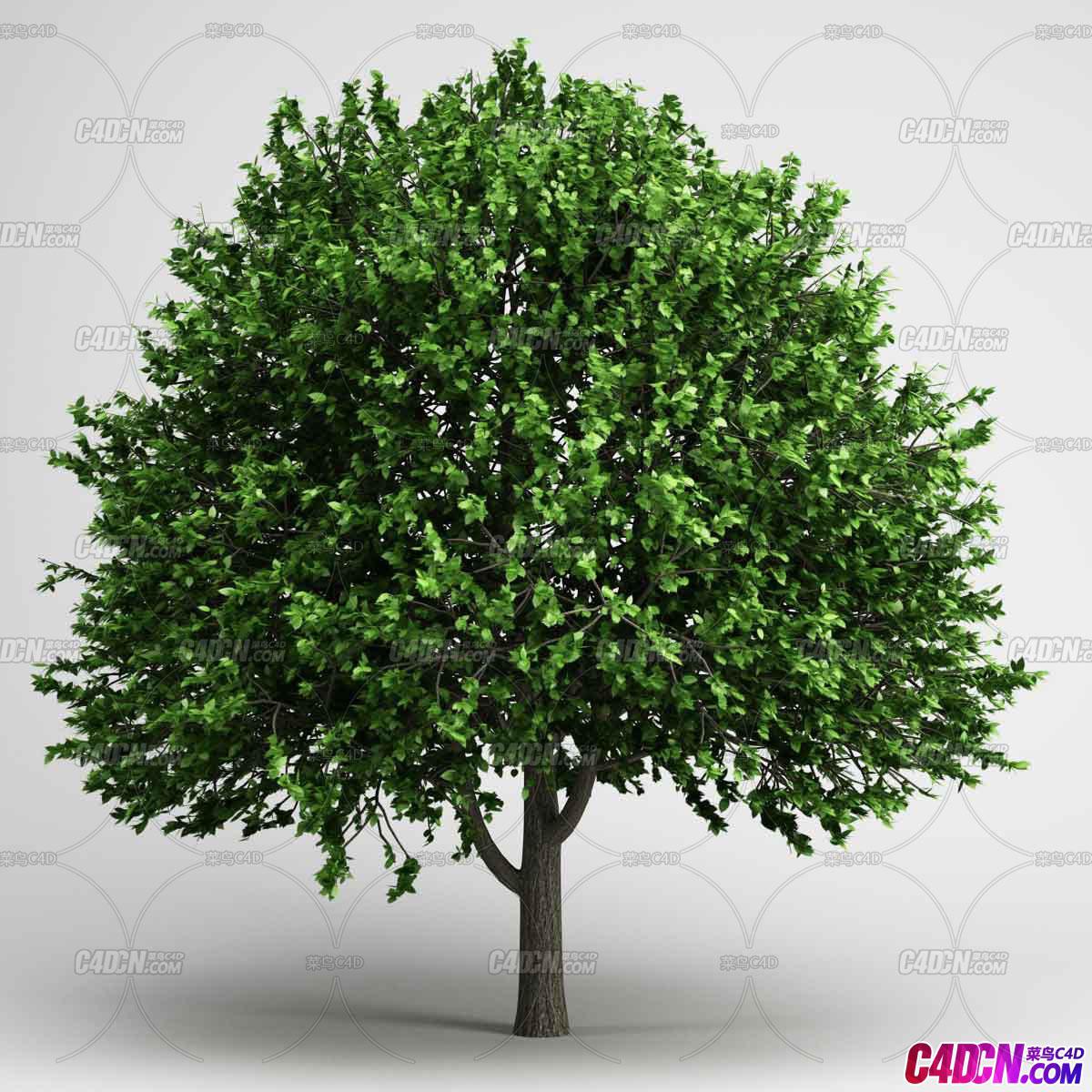 lvshu绿树植物C4D模型免费下载