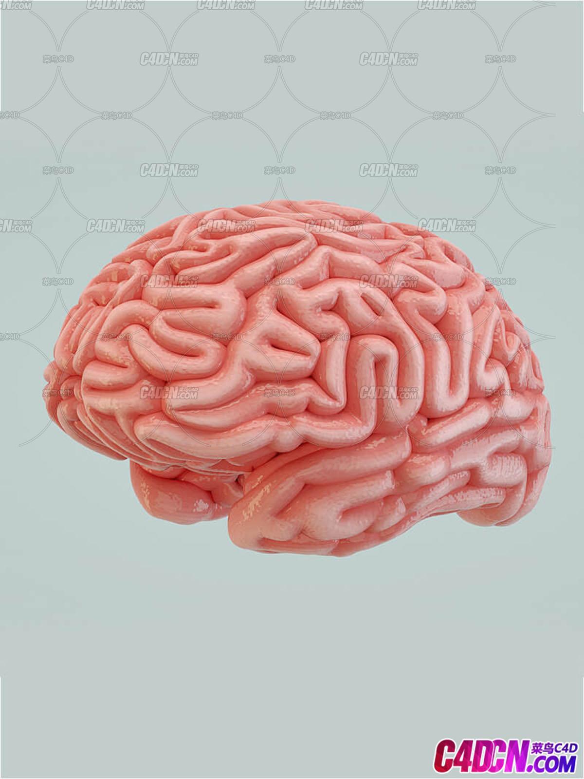 C4D模型 粉色大脑人体器官3D模型
