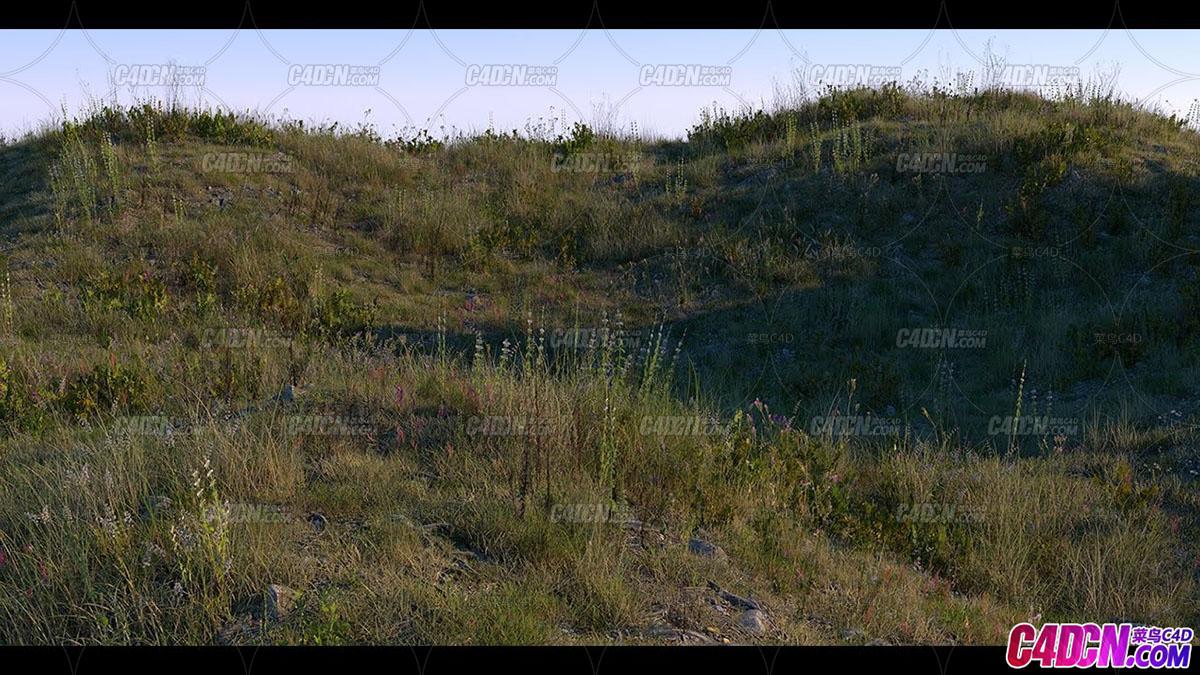 Octane渲染器植物花草贴图制作写实逼真山坡草地渲染C4D教程
