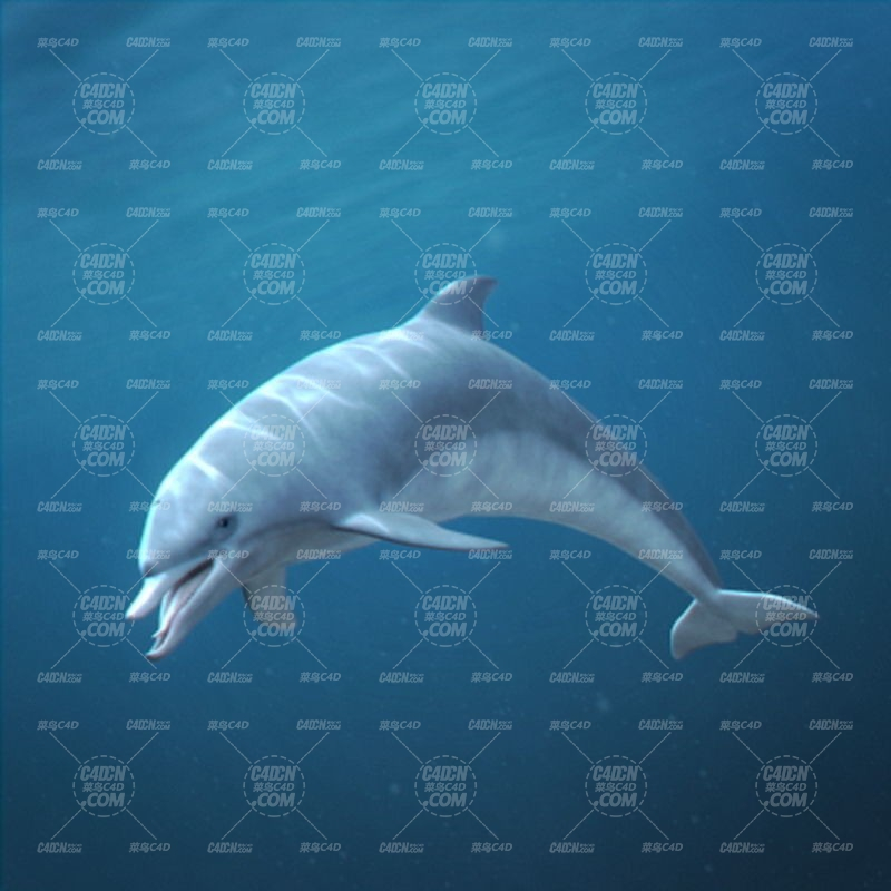 海豚海豹鲸鱼海洋生物C4D模型(含绑定) Marine Mammals 3D model