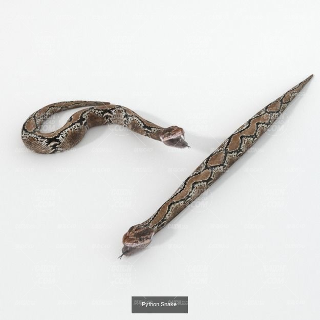 C4D模型 蟒蛇动物模型 Python animal C4D model