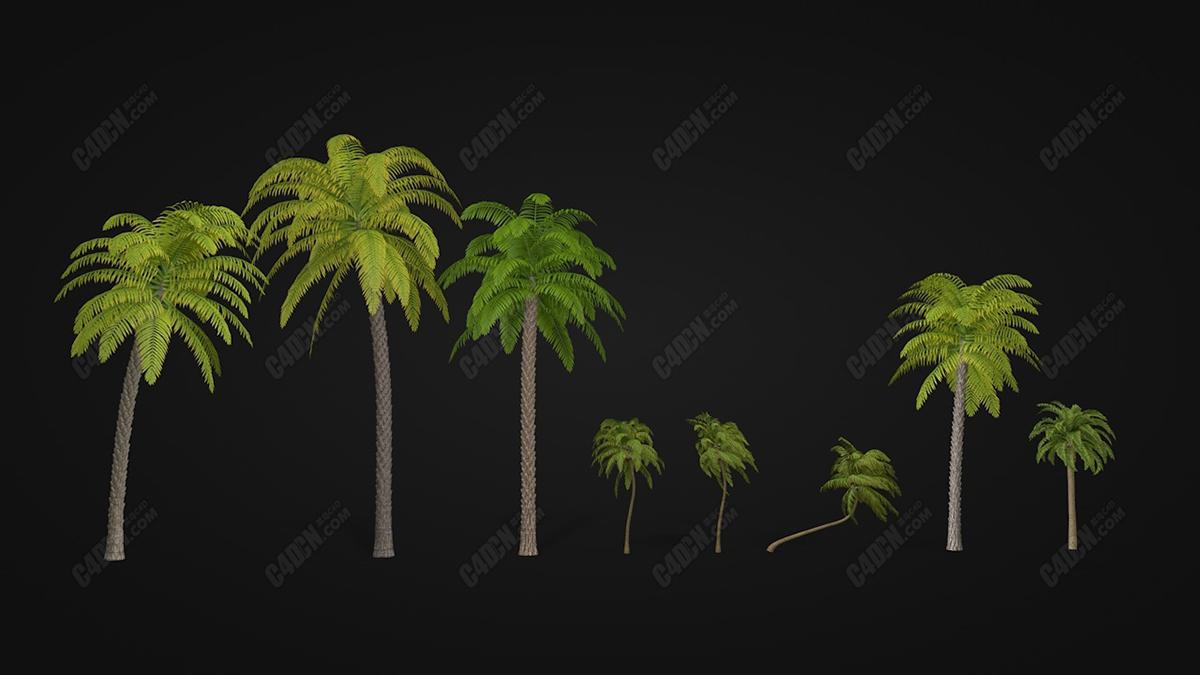 C4D树木植物模型-八种不同生长形状的海南岛亚热带椰子树