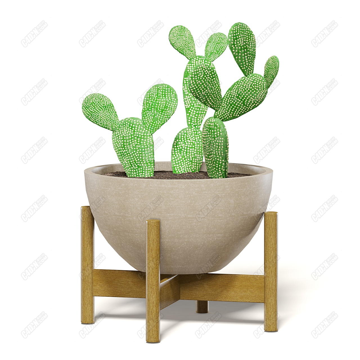C4D木制底座陶瓷简约花盆观赏盆栽模型
