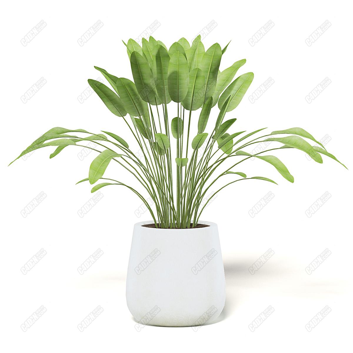 C4D客厅阳台观赏植物净化空气盆栽模型