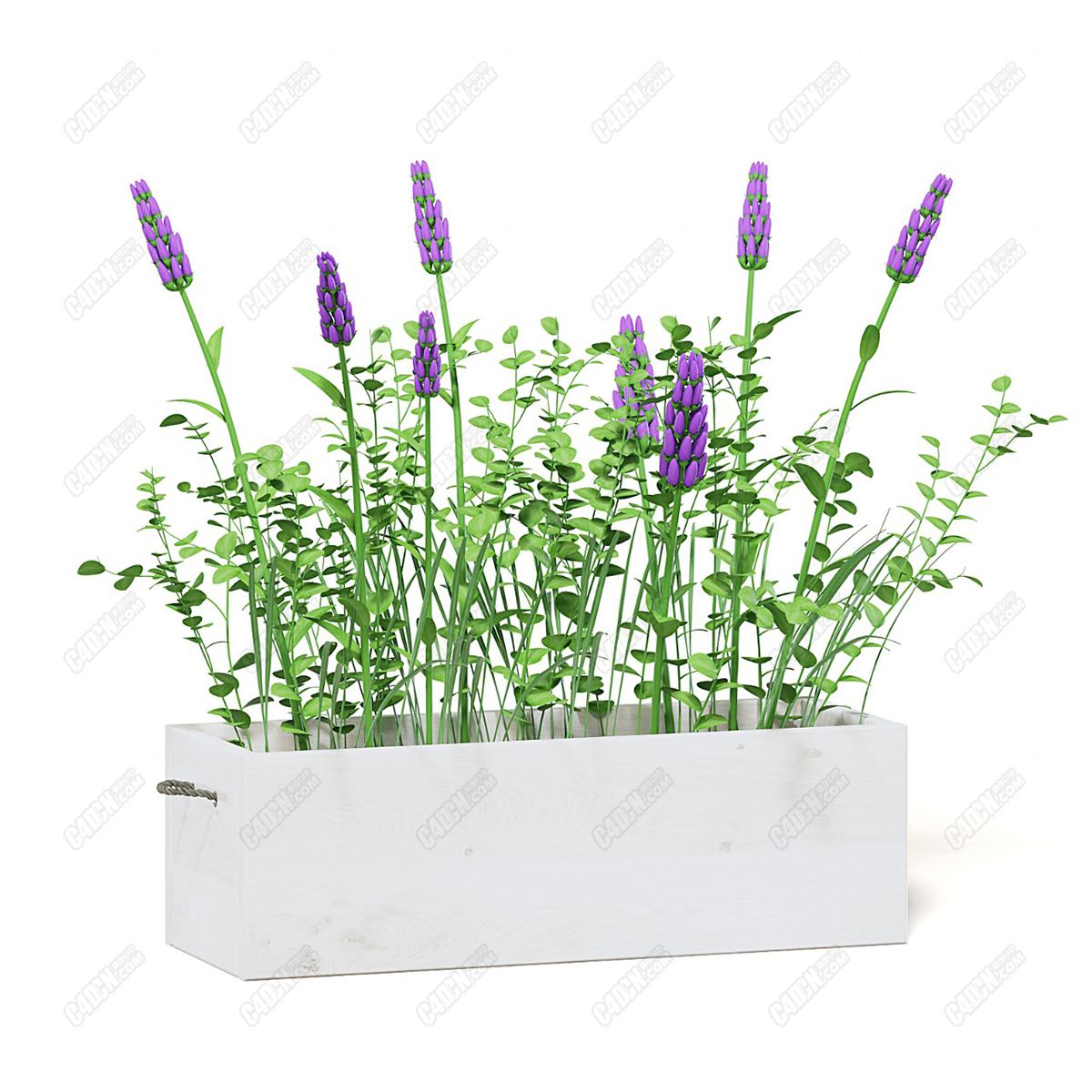 C4D紫色花朵插花艺术盆栽模型