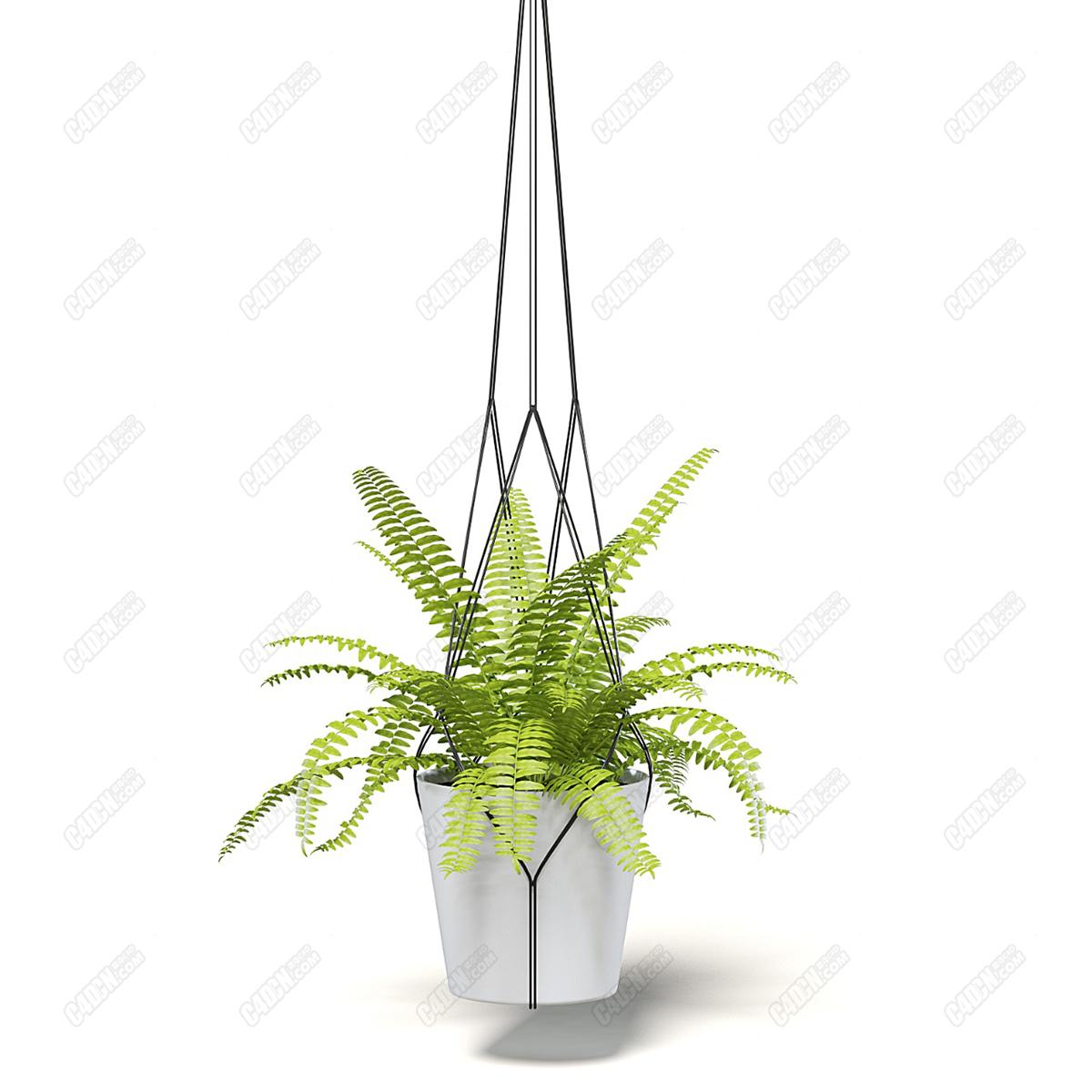 C4D吊挂含羞草绿叶植物盆栽模型