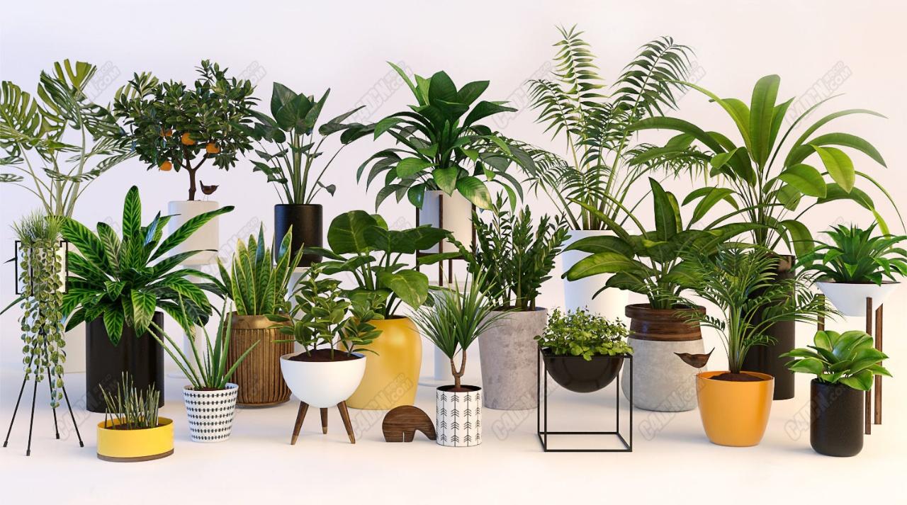 C4D超级盆栽植物模型包 Potted C4D model