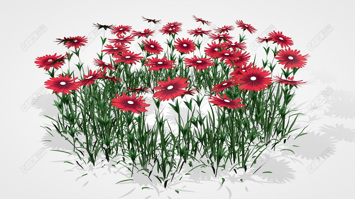 C4D小红花草植物花卉模型 Aster Flower Model