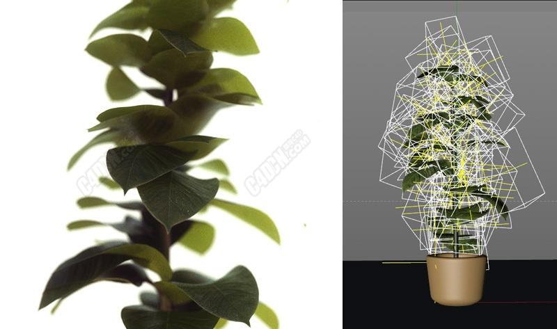 OC渲染器C4D橡胶树盆栽植物模型