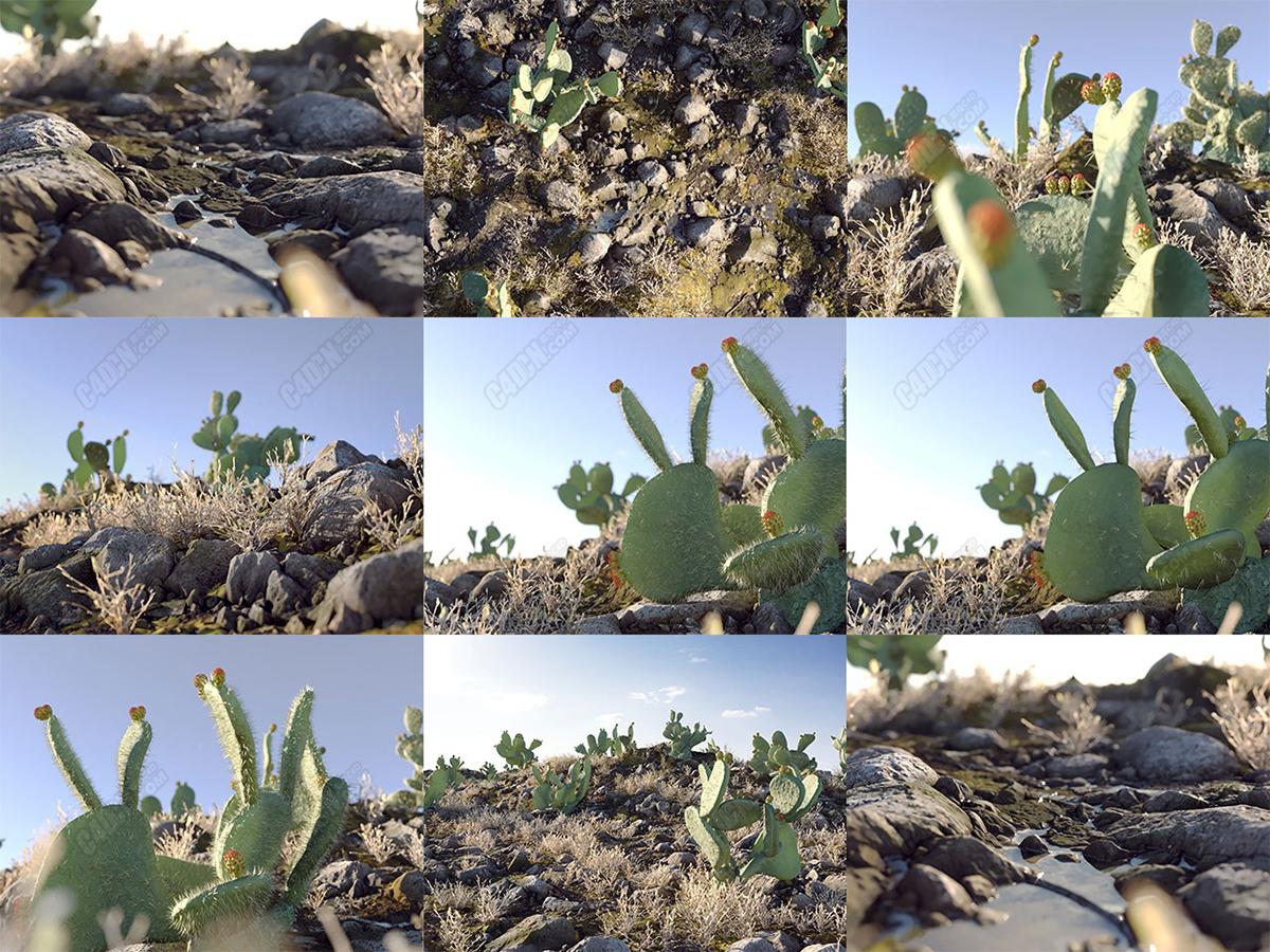 沙漠植被草地模型包  Apache Desert Pack
