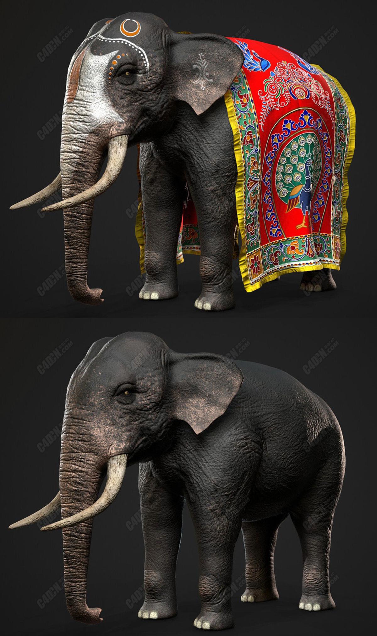 C4D印度大象动物模型 Indian Elephant