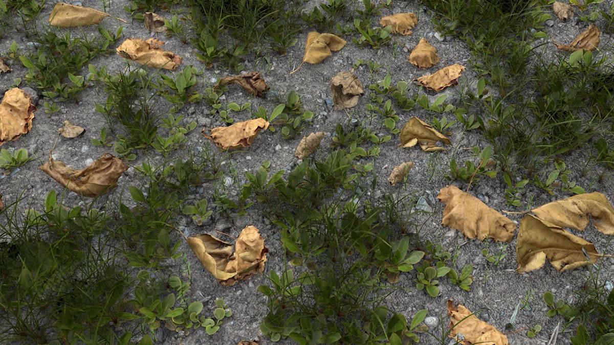 C4D写实草坪枯树叶草地模型
