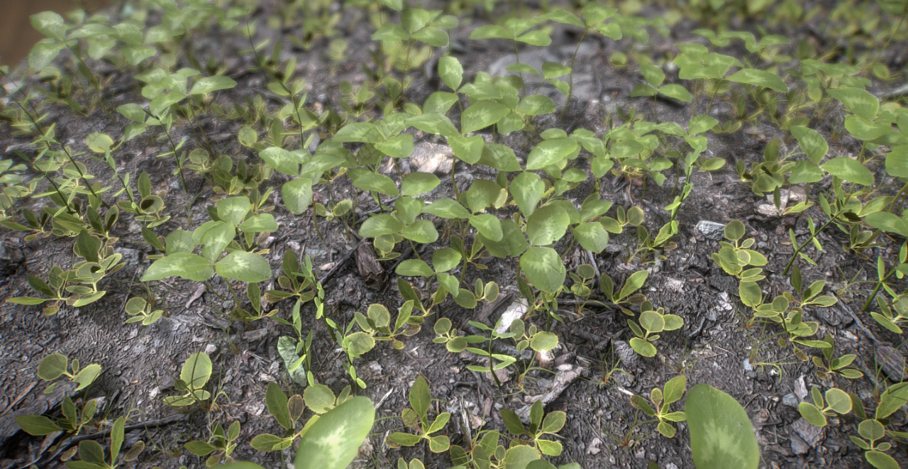 C4D春天的三叶草地模型 Clover Spring