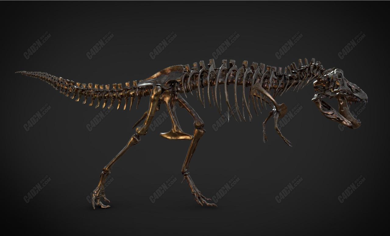 C4D霸王龙骨架模型