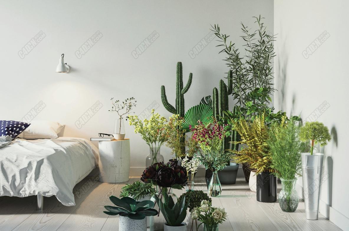 21个高精度写实植物盆栽植物花卉模型合集