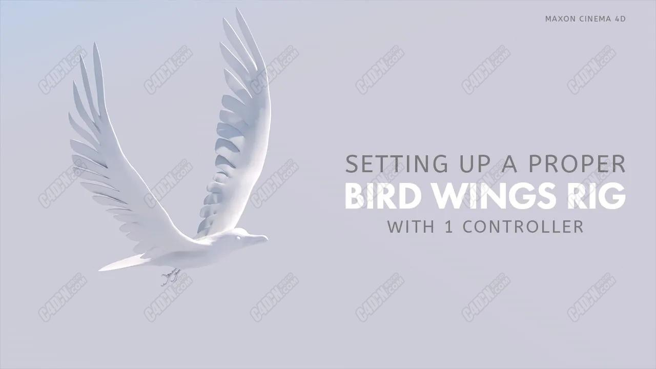 C4D使用xpresso和骨骼绑定制作鸟类飞行翅膀动画教程