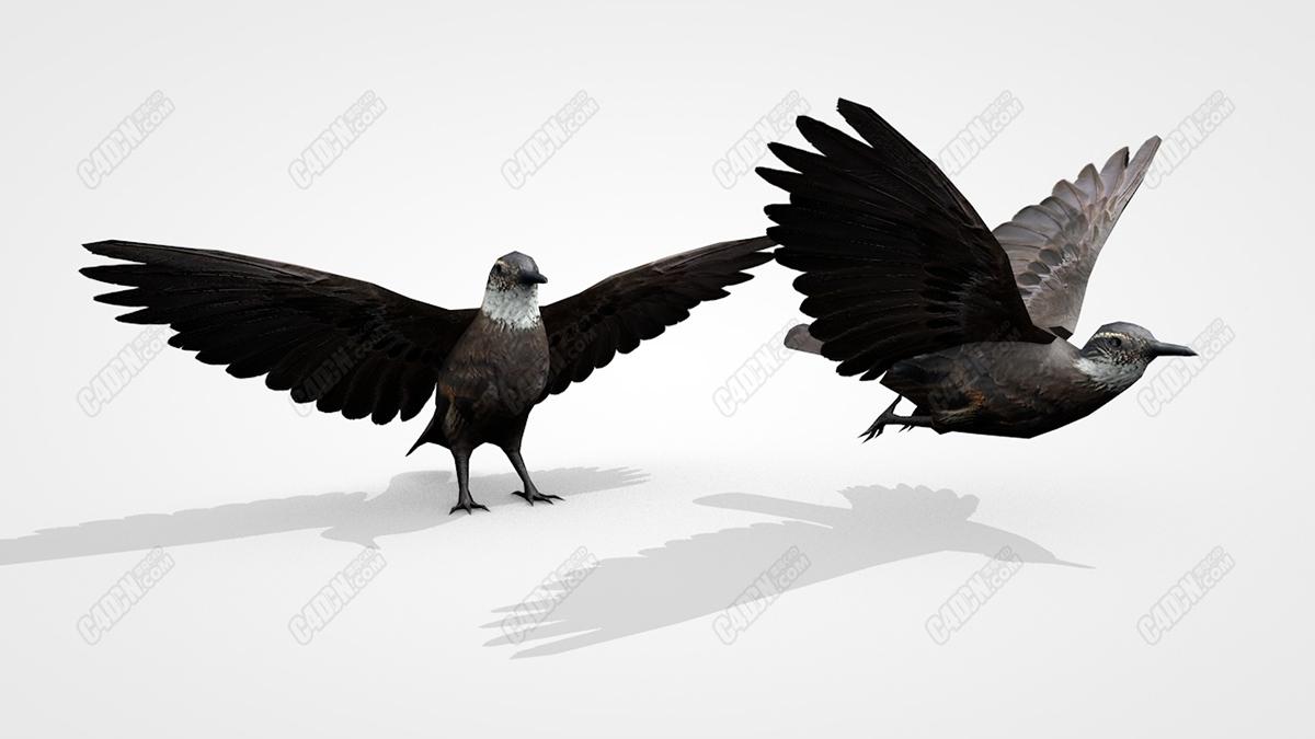 C4D张开翅膀的鸟儿模型包含绑定和动画