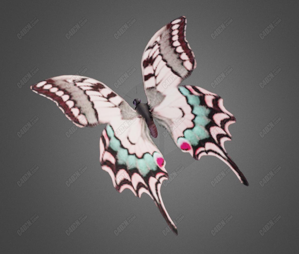 C4D飞蛾昆虫飞行动画工程模型