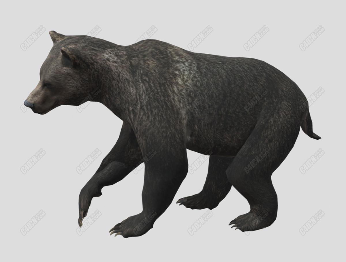 奔跑跳跃中的C4D灰熊狗熊模型(包含绑定动画)