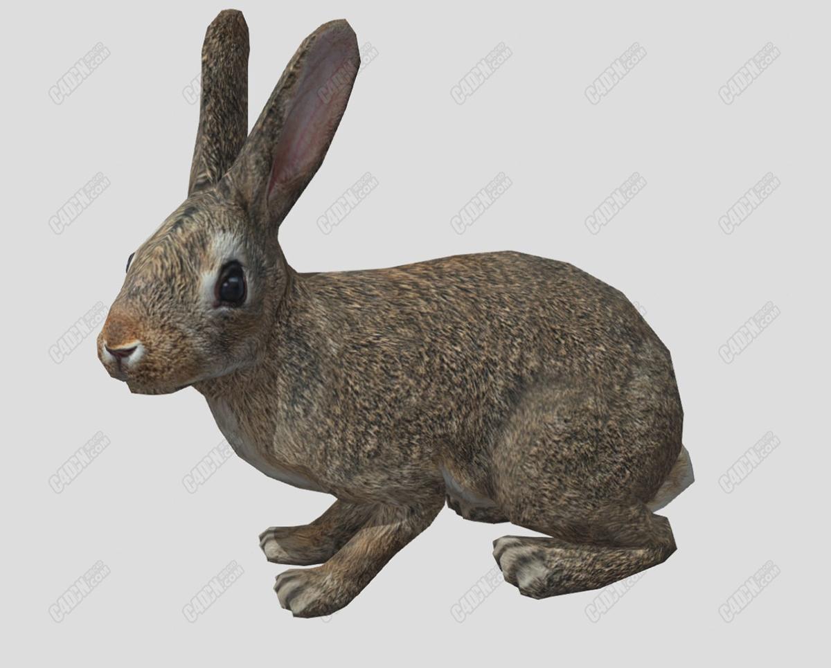 C4D吃草的灰兔动物模型(包含骨骼动画)