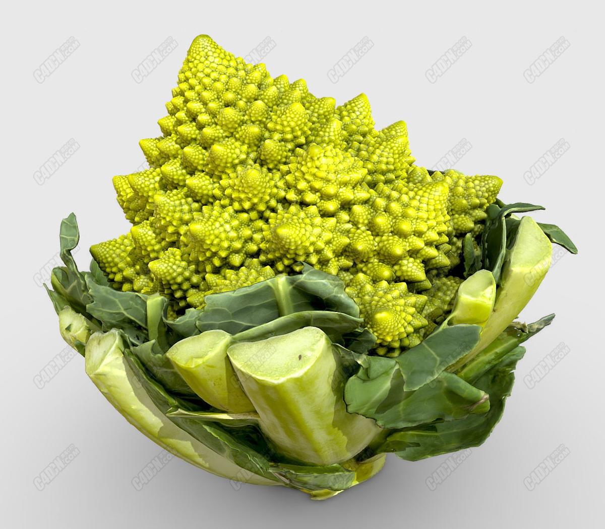 C4D罗曼内斯科(Romanesco)蔬菜模型
