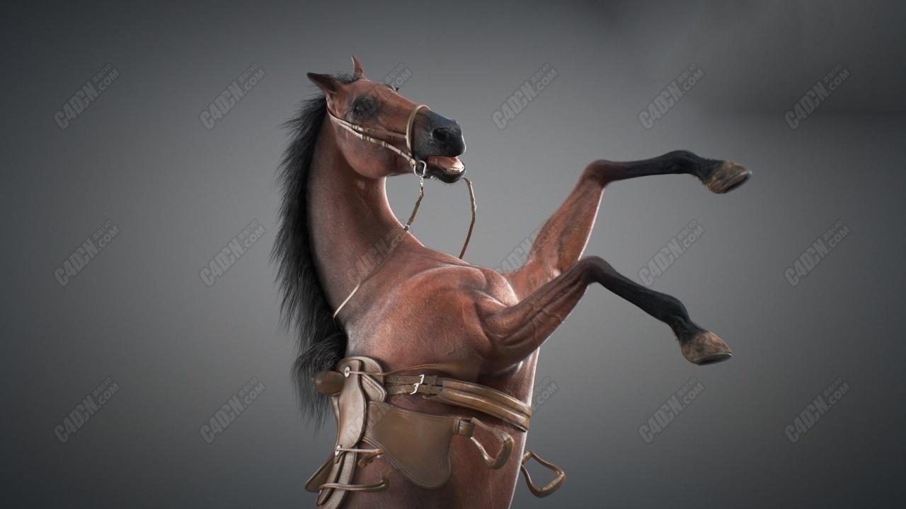 MAYA马匹骏马动物马鞍动画骨骼绑定模型