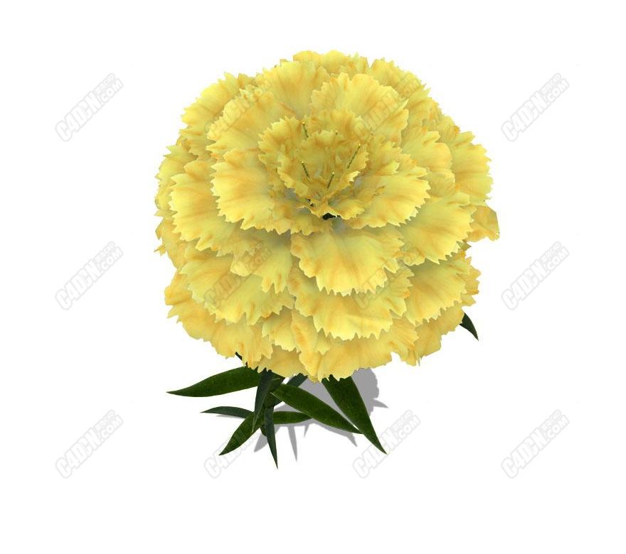 C4D康乃馨花朵植物花卉模型