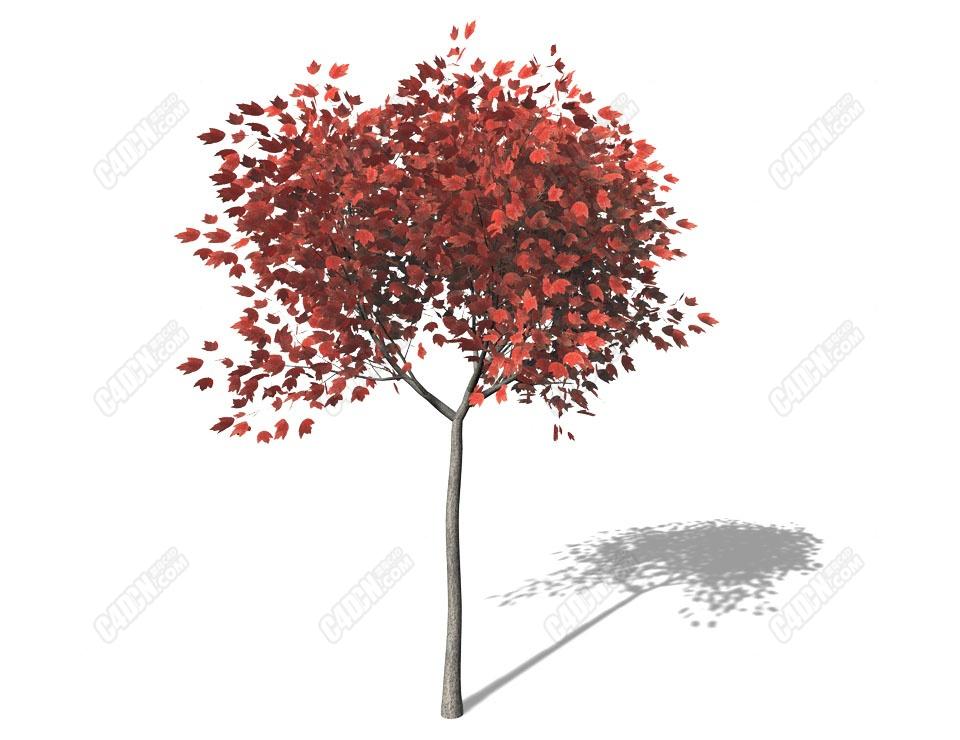 C4D小紅楓樹模型