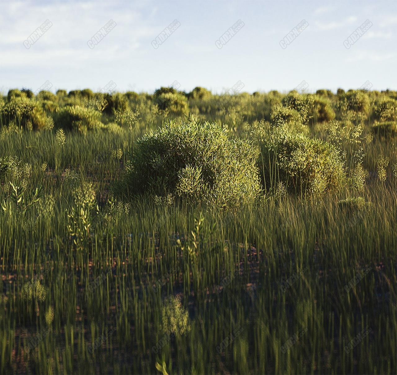 Octane渲染器C4D藍天白云灌木叢草地野外環境生態工程模型
